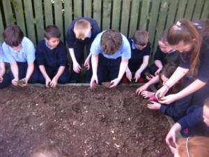 gardening (8)