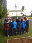 schoolgarden (5)